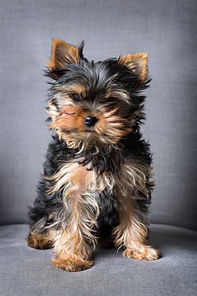 Which small dogs are the best companions? Here are the top 5!